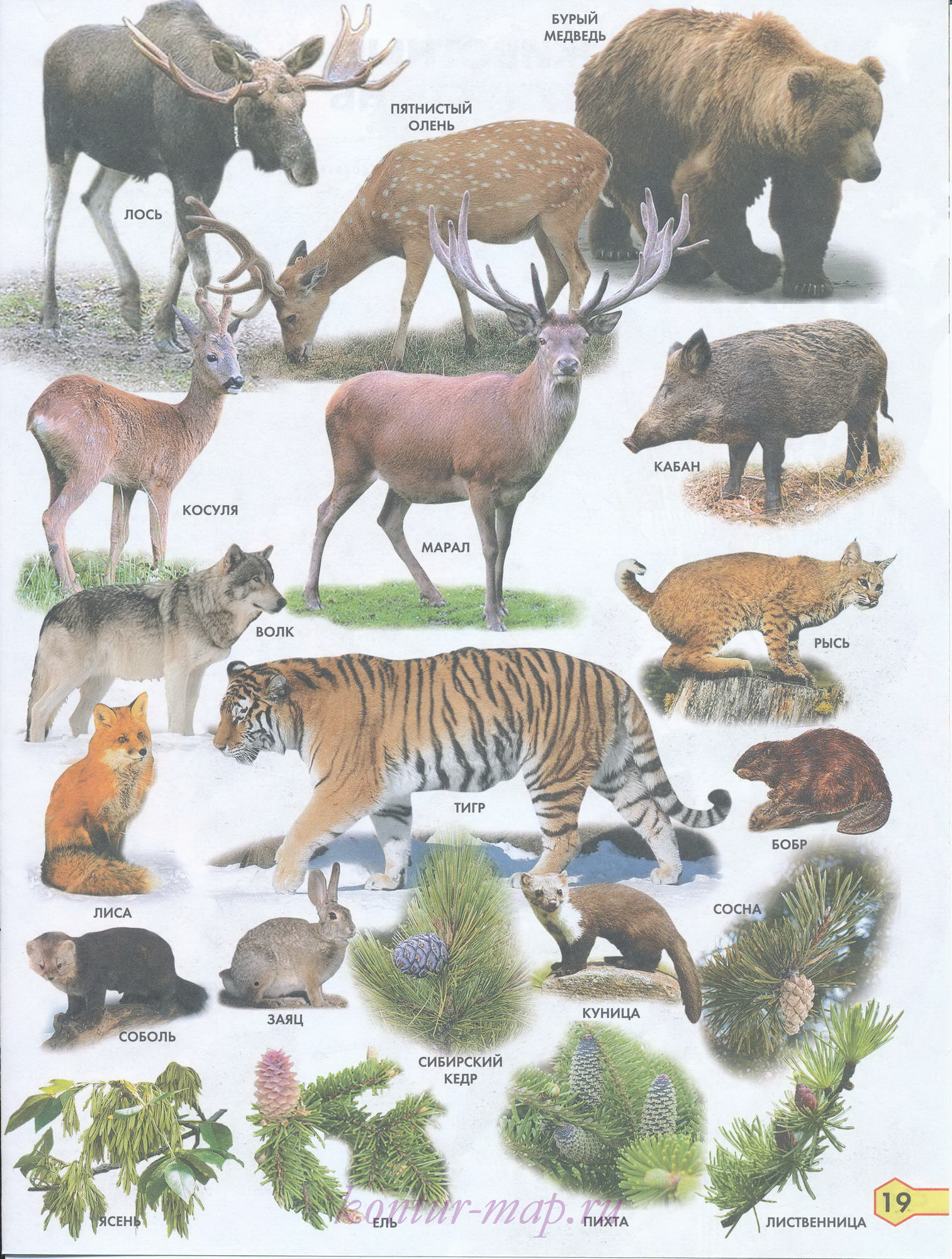 Растения и животные лесной полосы